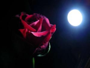 rosa[1]